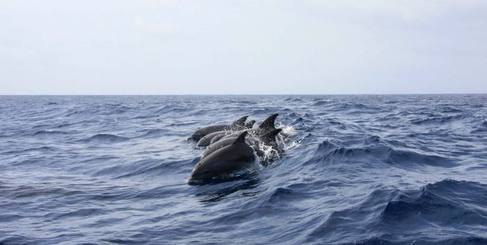 albirament de cetacis